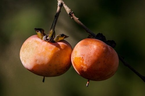 Persimmon: a Nutritious, Fruity Gem