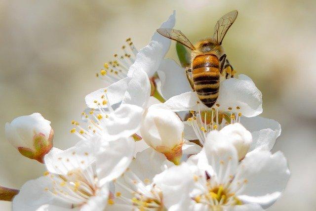 How Neonics Harm Honey Bees