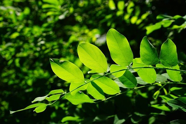 Chlorophyll Supports the Body's Detox Pathways